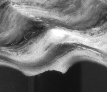dettaglio dell'Acros sviluppato in rodinall