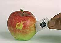 stampa bio sulla mela